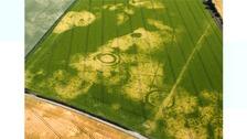 Dry summer reveals outlines of Norfolk's hidden history