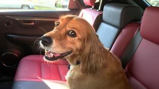 hot dog in car