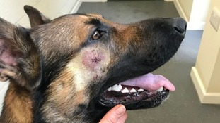 PD Quantum needed nine stitches after he was attacked.