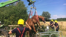 Horse lifted to safety after being trapped in wooden bridge