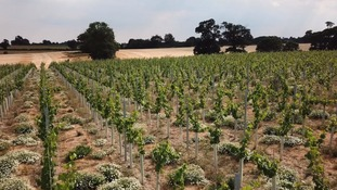 Winbirri Vineyard hoping to produce the best grapes ever this year