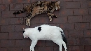 The two dead cats
