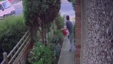Watch: Bungling gnome thief falls through garden fence in Kettering