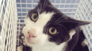 This kitten survived an incident in Erdington