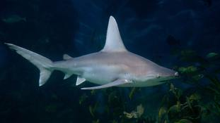 Sharks are believed to have caused the puncture wounds.