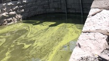 Toxic blue green algae found in four locations in Cumbria