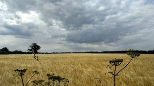Anglia Weather: Warm, humid and dry with variable cloud