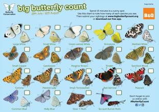 People are asked to spot 17 common butterflies and two day-flying moths in the Big Butterfly Count.