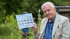 'Breathing space' - Attenborough plea for Big Butterfly Count