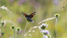 Big Butterfly Count - how can you get involved?