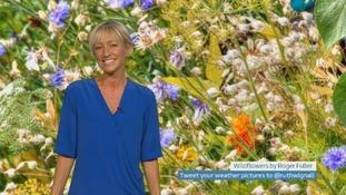 Wales Weather: Rain heading your way?