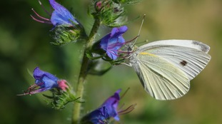The information gathered could help protect butterflies in the future.