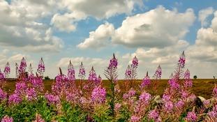 Beeley Moor, Derbys.  JANICE DYSON