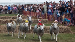 People in Jersey hoping to travel to Sark's sheep race left disappointed