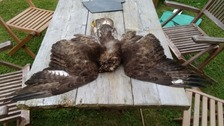 Appeal after birds of prey found dead in Dorset