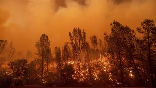 A wildfire intensifies and burns trees in Redding, Northern California.