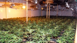 Around 2000 plants were found in an industrial unit