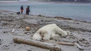 Polar bear shot dead by cruise ship employee after attacking guard