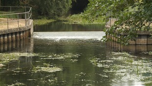 Heatwave causes oxygen levels in river to drop