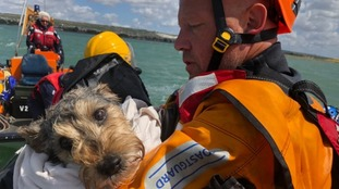 Stranded dog rescued from island in Portsmouth Harbour