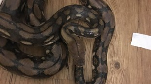 Blind man from Exeter discovers eight-foot python in his bathroom