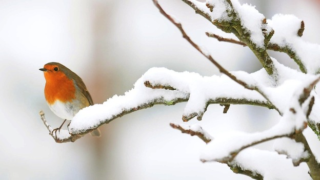 A burst of snow is likely to cover much of Britain today