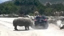 A bizarre moment when a rhino goes tusk first into a vehicle at a zoo in central Mexico.