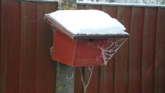 Snowy birdbox, frosty cobwebs.