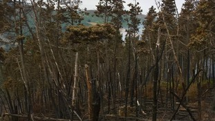 Destroyed Cwymcarn Forest, smoke in background