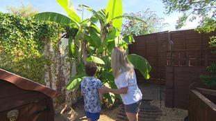 Tropical heat springs fruity surprise