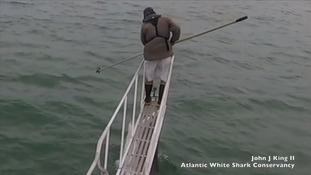 Great white shark inches from scared expert after lunging at research boat in astonishing footage
