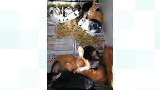 Family of dumped bunnies rescued