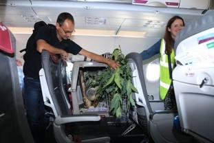 The koala had his own seat on the plane