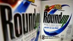 Roundup herbicide is on of Britain's most popular weed killer.