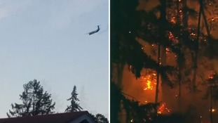 The plane was filmed doing stunts before crashing into trees of a Washington island.