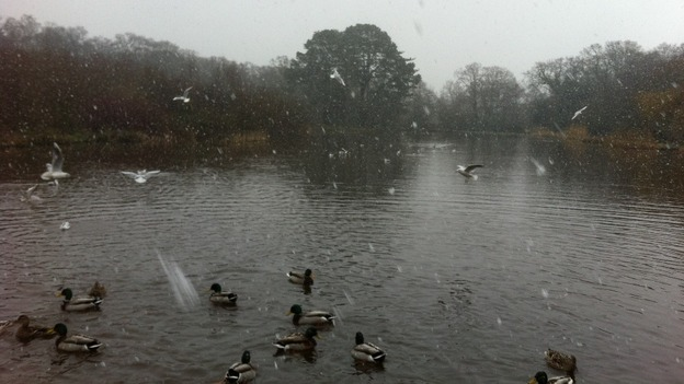 Snow on the duck pond