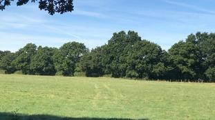 field on pinstraw farm