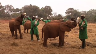 The human foster parents saving Kenya's orphans issue World Elephant Day appeal