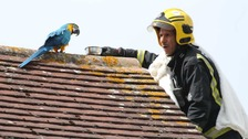 Potty-mouthed parrot greets firefighters with tirade