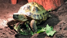 Couple 'shell-shocked' after tortoise found in pipe