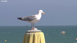 Animal charity urging beachgoers to 'avoid confrontations' with seagulls