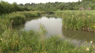 Spirit of the South: exploring Arundel's wildlife & wetlands