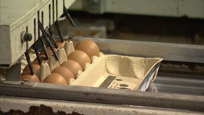 Producers issue warning over price of eggs