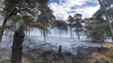 Deliberate grass fires 'quadruple' in a year