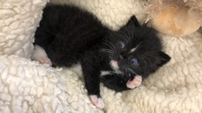 Trapped kittens rescued by builders from floorboards
