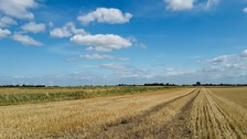 Sunshine over wheat fields
