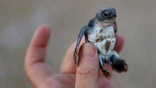 The remarkable comeback of endangered turtles in Cyprus