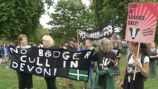 Protesters against badger culling took to the streets of Exeter