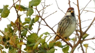 Environmentalists in Guernsey want people to protect wildlife when cutting their hedgerows