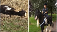 Little pony left for dead in field transforms into show champion